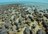Stromatolites - earth's first organisms